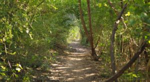 This Stunning Riverside Trail In Austin Is A True Hidden Gem
