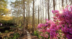 The 9 Best And Most Beautiful Places To See Wildflowers In Louisiana This Spring