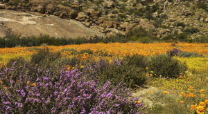 A Spring Super Bloom Is Coming To This Tiny Town In California