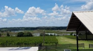 Visit Florida's Largest Winery, Producing Close To 200,000 Gallons Of Wine & Champagne Every Year