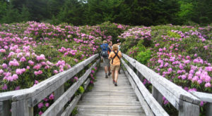 The Most Beautiful Rhododendron Festival In Tennessee You Won't Want To Miss
