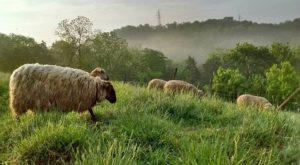 The Hillside Farm Near Cincinnati Where Your Family Can Spend A Magical Day