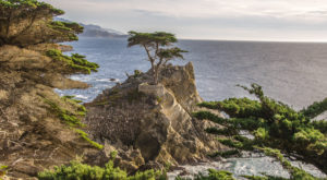 Photography Of The 4 Most Iconic Trees In The US Will Truly Astonish You