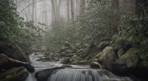 The Jungle-Like Area Of Tennessee That You Have To Experience For Yourself