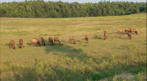 The Magical Place In Michigan Where You Can View A Wild Elk Herd