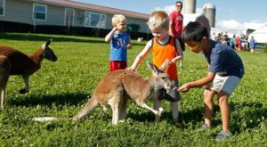 There's A Kangaroo Farm In Iowa And You're Going To Love It