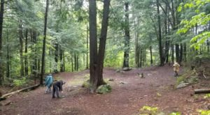 Hike This Ancient Forest In Vermont That's Home To 400-Year-Old Trees