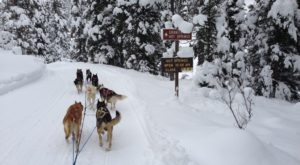 The Guided Sled Dog Tour In Wyoming That Takes You Straight To A Relaxing Hot Spring