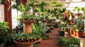 This Jungle-Like Greenhouse In Rhode Island Is A 4,000-Square-Foot Tropical Paradise