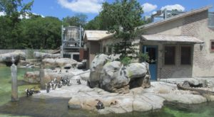 You Can Enjoy Breakfast With Penguins At This Maryland Zoo
