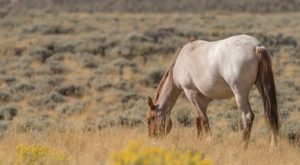 The Magical Place In Wyoming Where You Can View A Wild Horse Herd
