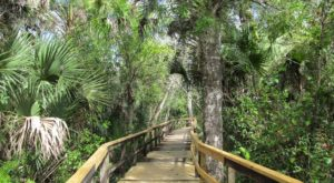 The Largest State Park In Florida Is Also Home To A Beautiful Boardwalk Trail