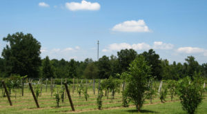 The Award-Winning Winery In Alabama We Know You Don't Want To Pass Up