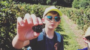 Take The Whole Family On A Day Trip To This Pick-Your-Own Berry Farm In Mississippi