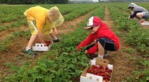 Take The Whole Family On A Day Trip To This Pick-Your-Own Strawberry Farm In Michigan