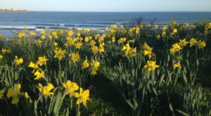 This Daffodil Festival In Rhode Island Will Enchant You Beyond Words