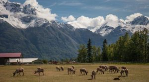 The Adorable Reindeer Farm In Alaska Your Whole Family Will Love