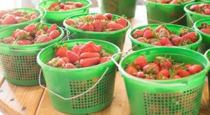 The Strawberry Festival In Georgia Is The Most Charming Way To Celebrate Spring