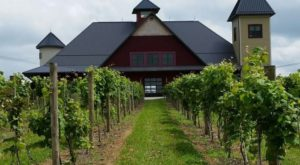 10 Picture Perfect Vineyards Hiding In Ohio's Wine Country You'll Want To Visit