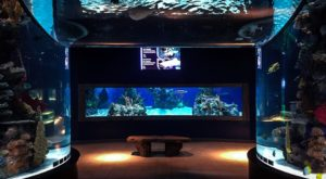 Explore This One-Of-A-Kind Aquarium In Pennsylvania The Whole Family Will Love