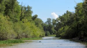 The Largest River Swamp In The Country Is Right Here In Louisiana And It's Full Of Adventures