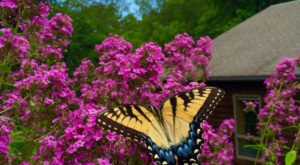 The Butterfly Forest In Delaware That's The Perfect Family Destination