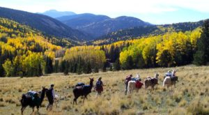 Go Hiking With Llamas In New Mexico For An Adventure Unlike Any Other