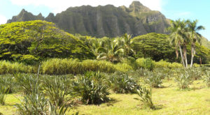 The Off The Beaten Path Farm In Hawaii Everyone Must Visit At Least Once