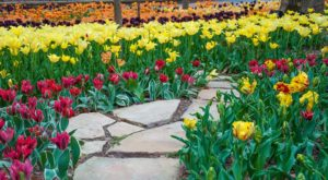 You Won't Want To Miss Tiptoeing Through The Tulips At This Arkansas Garden