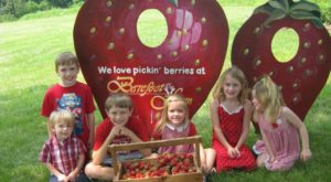 Take The Whole Family On A Day Trip To This Pick-Your-Own Strawberry Farm In Pennsylvania