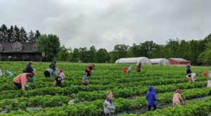 Take The Whole Family On A Day Trip To This Pick-Your-Own Strawberry Farm In West Virginia