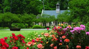 This Beautiful 440-Acre Botanical Garden In Louisiana Is A Sight To Be Seen