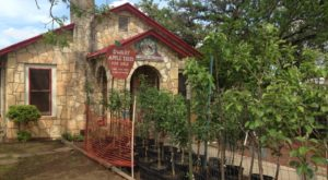 This Charming Apple Store And Bakery Near Austin Will Soon Become One Of Your Favorite Places