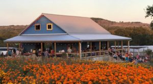 The Dreamy Wildflower Farm Near Austin You'll Want To Visit This Spring