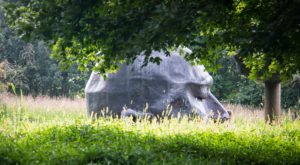 Giants Live In This New York Park And You'll Want To See Them For Yourself