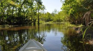 You May Never Want To Leave This Under Appreciated State Park In Louisiana