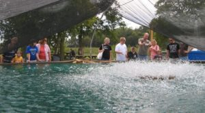 This Fish And Shrimp Farm In Ohio Makes An Unexpectedly Awesome Day Trip