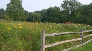 This Wildflower Preserve In Pennsylvania Will Be In Full Bloom Soon And It's An Extraordinary Sight To See