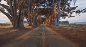 This Breathtaking California Tree Tunnel Looks Like Something From A Dream