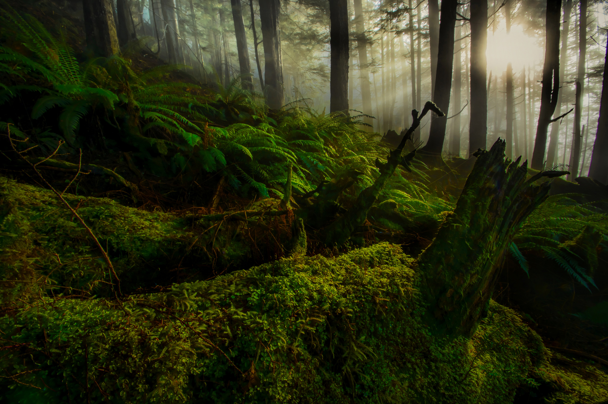 Hike Through The Largest Old Growth Forest In The U S