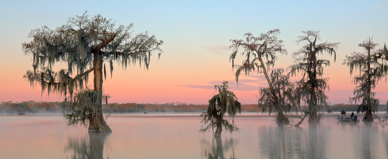 Louisianabanner image
