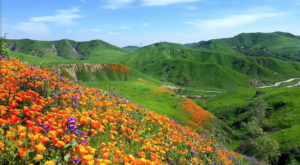 It's Impossible Not To Love This Breathtaking Wild Flower Trail In Southern California