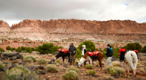 Go Hiking With Llamas In Utah For An Adventure Unlike Any Other