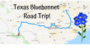 Take This Road Trip To The 8 Most Eye-Popping Bluebonnet Fields In Texas