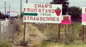 Take The Whole Family On A Day Trip To This Pick-Your-Own Strawberry Farm In Northern California
