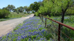 This Picturesque Hill Country Drive Near Austin Is Blooming With Color