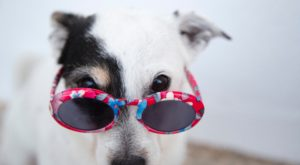 Your Pup Will Love This Spring Festival In Massachusetts That's Just For Dogs