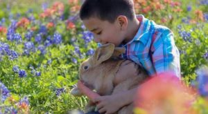 The Adorable Bunny Farm In Texas Your Whole Family Will Love