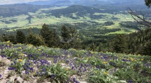 This Invigorating Montana Trail Takes You Straight To The Top Of The World