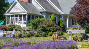 The Dreamy Lavender Farm In New Hampshire You'll Want To Visit This Spring